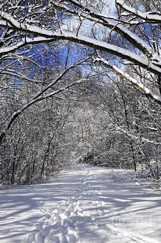 Winter Poster featuring the photograph Path In Winter Forest by Elena Elisseeva