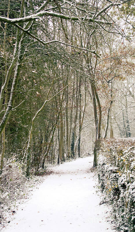 Countryside Poster featuring the photograph Winter Journey by Andy Smy