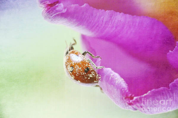 Bug Poster featuring the photograph A Breath Of Spring by Angela Doelling AD DESIGN Photo and PhotoArt