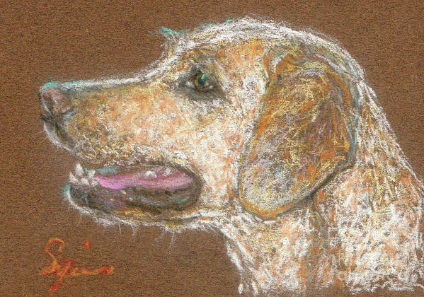 Dog Poster featuring the drawing Amber by Suzie Majikol-Maier