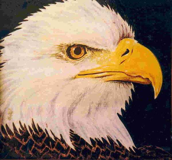 Eagle Poster featuring the painting American Bald Eagle by Dy Witt