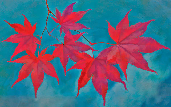 Maple Leaf Poster featuring the photograph Autumn Crimson by William Jobes