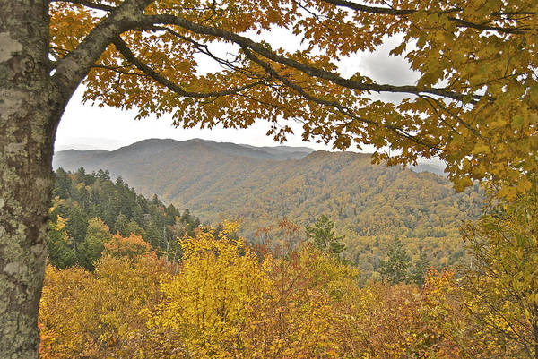 Landscape Poster featuring the photograph Autumn In The Smokies by Michael Peychich