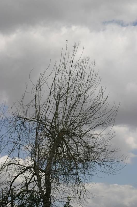 Tree Poster featuring the photograph Being With Dying by Dagmar Ceki