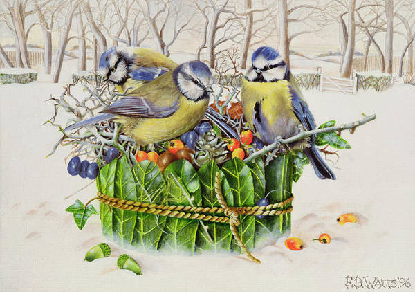 Winter; Christmas; Berries; Holly Berry; Bird Poster featuring the painting Blue Tits In Leaf Nest by EB Watts