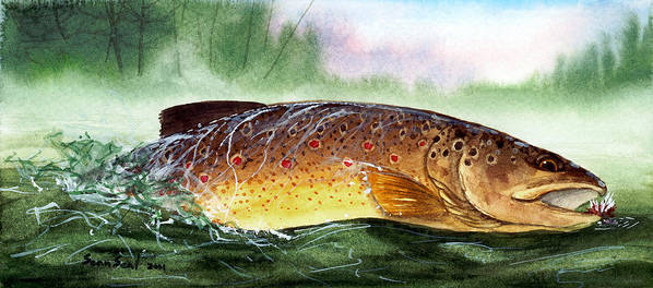Trout Poster featuring the painting Brown Trout Taking A Fly by Sean Seal
