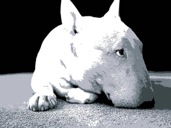 English Bull Terrier Poster featuring the digital art Bull Terrier White On Black by Michael Tompsett
