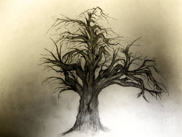 Tree Poster featuring the drawing Enchanted by John Krakora