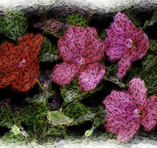 Digital Photograph Poster featuring the photograph Flower Sketch by David Lane
