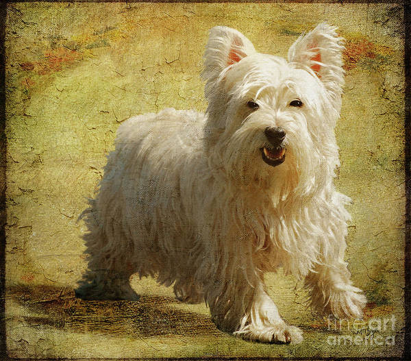 Dogs Poster featuring the photograph Friendly Smile by Lois Bryan