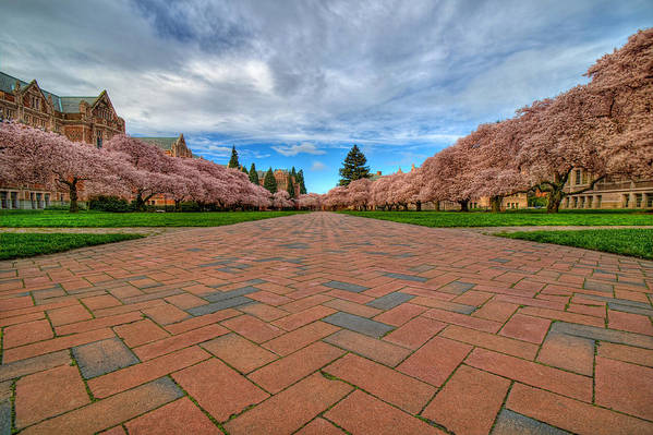 University Of Washington Poster featuring the photograph Full Bloom by Dan Mihai
