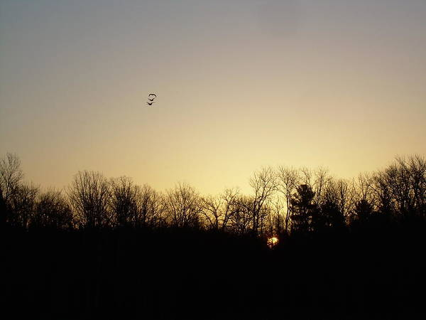 Geese Poster featuring the photograph Geese At Sunrise by Kent Lorentzen