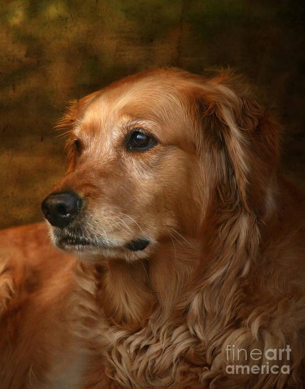Dog Poster featuring the photograph Golden Retriever by Jan Piller