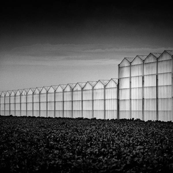 Greenhouse Poster featuring the photograph Greenhouse by Dave Bowman
