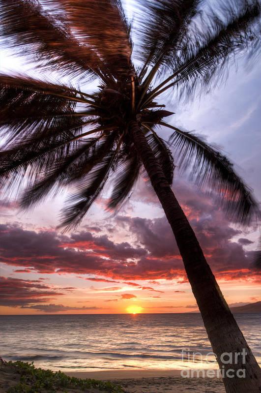 Hawaiian Sunset Poster featuring the photograph Hawaiian Coconut Palm Sunset by Dustin K Ryan