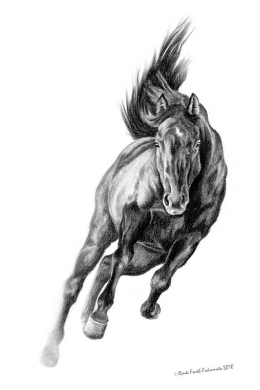 Horse Poster featuring the drawing Head On by Renee Forth-Fukumoto