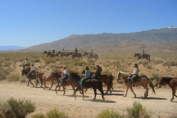 Horses Poster featuring the photograph Horse Drive From June Lake To Bishop California by Christine Till