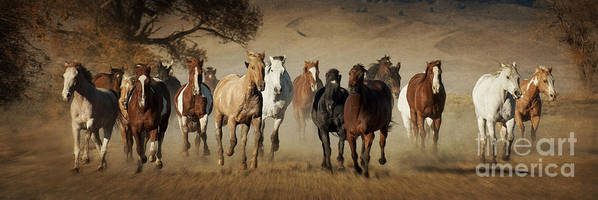 Horses Running Free Poster featuring the photograph Horses Running Free by Heather Swan