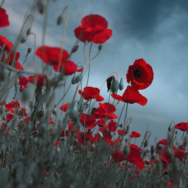 Flower Bed Poster featuring the photograph Hot Cold Contrast 1 by Floriana Barbu