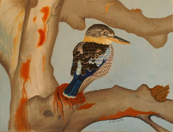 Bird Poster featuring the pastel Magnificent Blue-winged Kookaburra by Brian Leverton