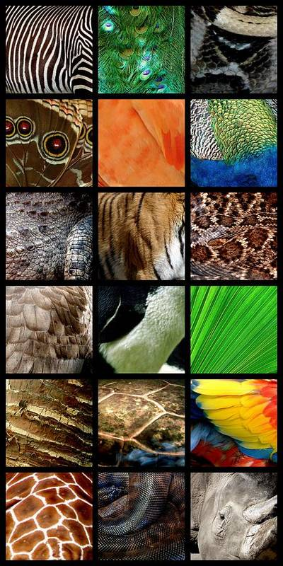 Animal Poster featuring the photograph One Day At The Zoo by Michelle Calkins