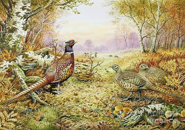 Fungus; Game Bird; Bracken; Rabbits; Pheasant; Pheasants; Tree; Trees; Grass; Leafs; Animals Poster featuring the painting Pheasants In Woodland by Carl Donner