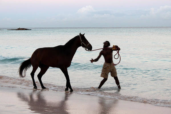 Barbados Poster featuring the photograph Race Horse And Groom 1 by Barbara Marcus