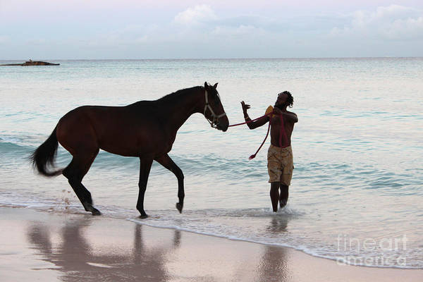Barbados Poster featuring the photograph Race Horse And Groom 2 by Barbara Marcus
