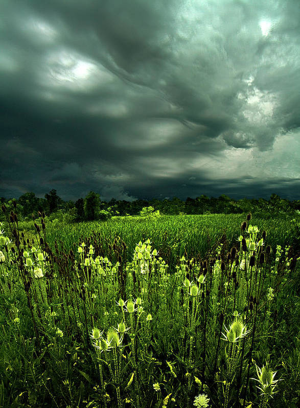 Horizons Poster featuring the photograph Rain by Phil Koch