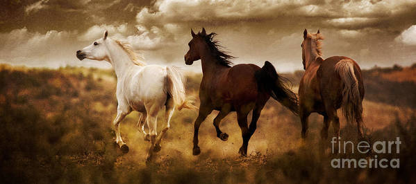 Running Horses Poster featuring the photograph Run For The Hills by Patty Hallman