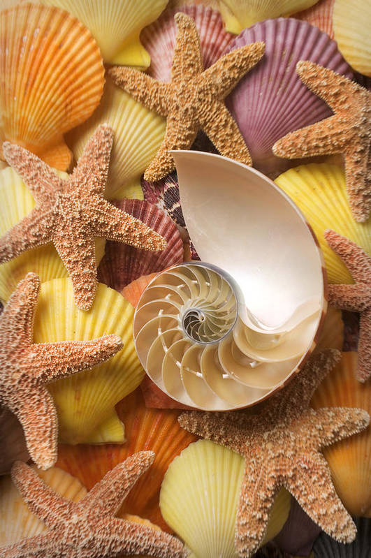 Starfish Poster featuring the photograph Sea Shells And Starfish by Garry Gay