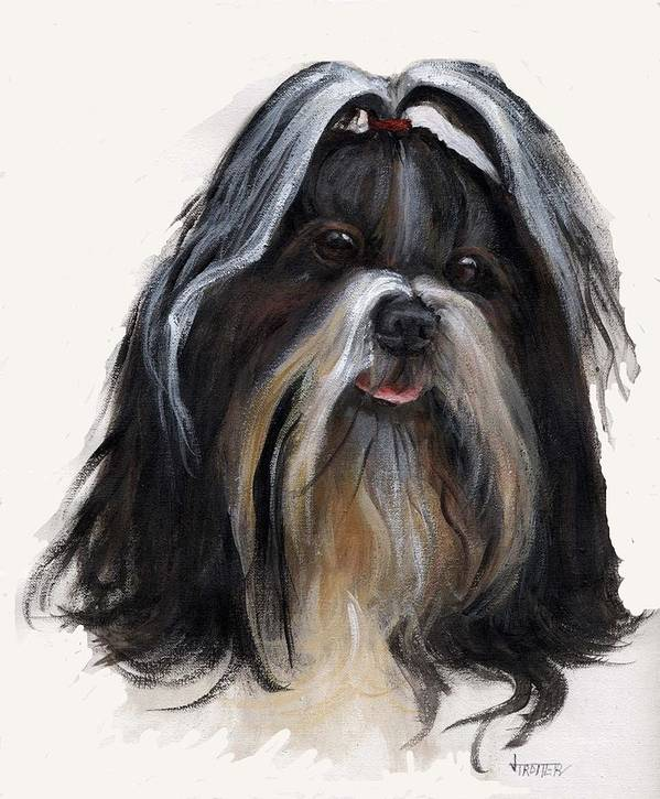 Animals Poster featuring the painting Shih Tzu by Jimmie Trotter