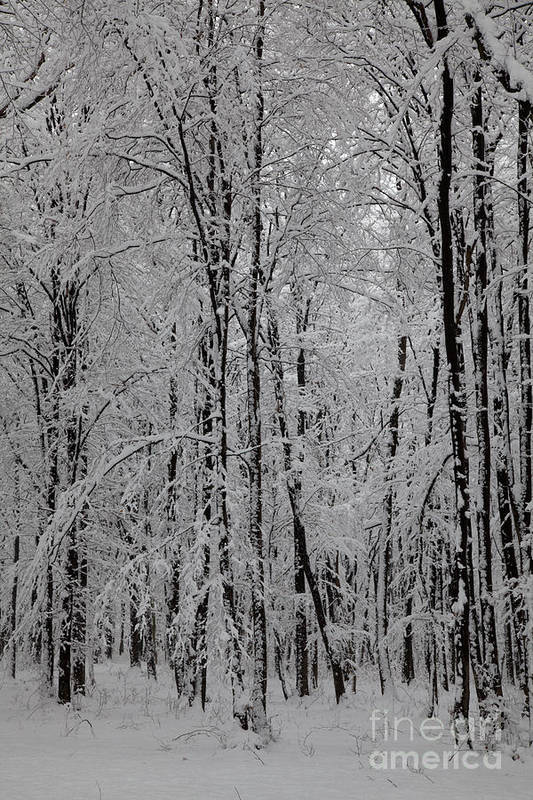 Winter Poster featuring the photograph Silence Of Winter by Gabriela Insuratelu