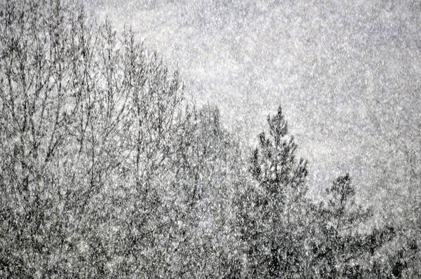 Winter Poster featuring the photograph Snow Squawl by Laura Mountainspring