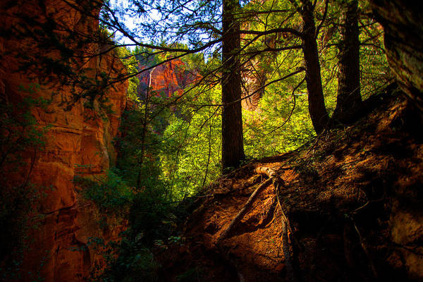 Outdoor Poster featuring the photograph Subway Forest by Chad Dutson