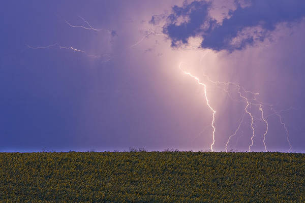 Lightning Poster featuring the photograph Sunflower Fields Lightning Storm Nature Print by James BO Insogna