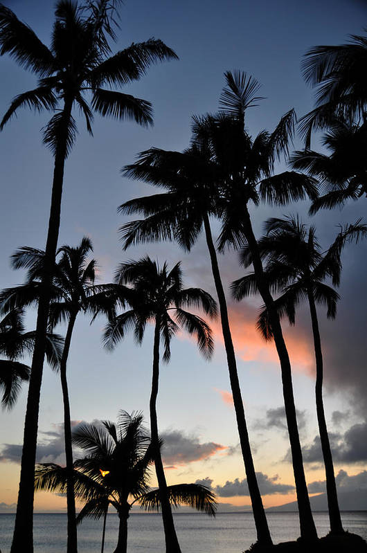 Sunset Palms Napili Bay Maui Hawaii Silhouettes Landscape Poster featuring the photograph Sunset Palms by Kelly Wade
