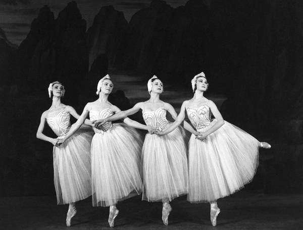 Mid Adult Poster featuring the photograph Swan Lake by Baron