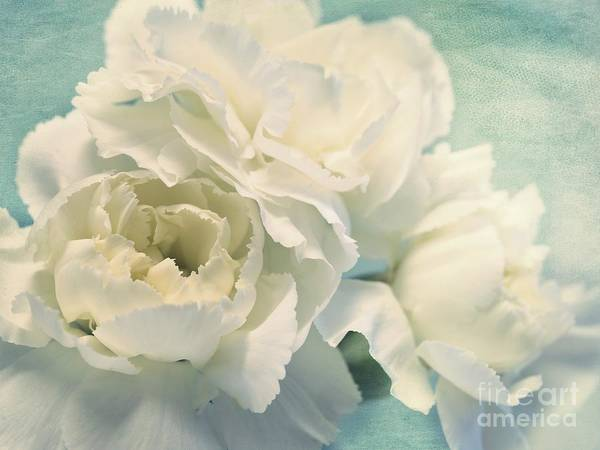 Carnation Poster featuring the photograph Tenderly by Priska Wettstein