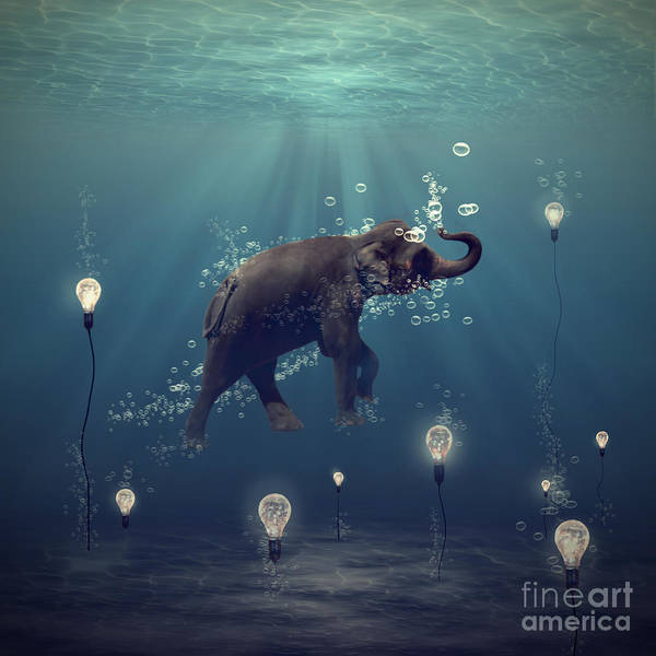 Elephant Poster featuring the photograph The Dreamer by Martine Roch