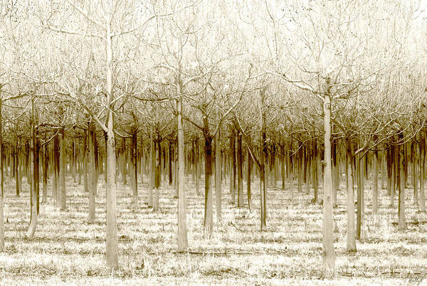 Landscape Poster featuring the photograph The Forest For The Trees by Holly Kempe