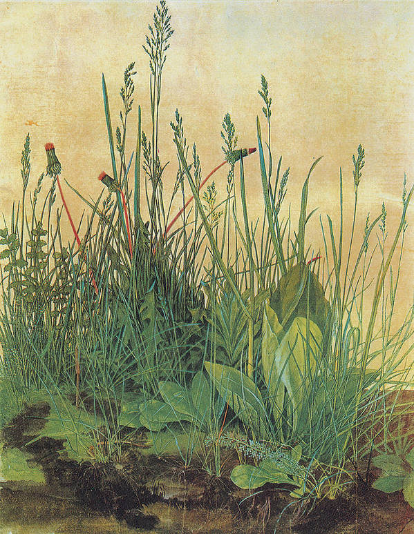 Albrecht Durer Poster featuring the painting The Large Piece Of Turf by Albrecht Durer