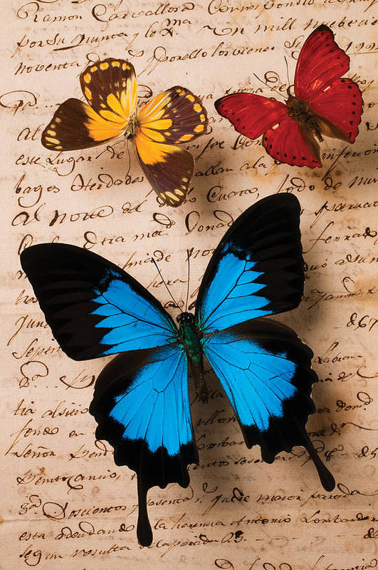 Letter Poster featuring the photograph Three Butterflies by Garry Gay