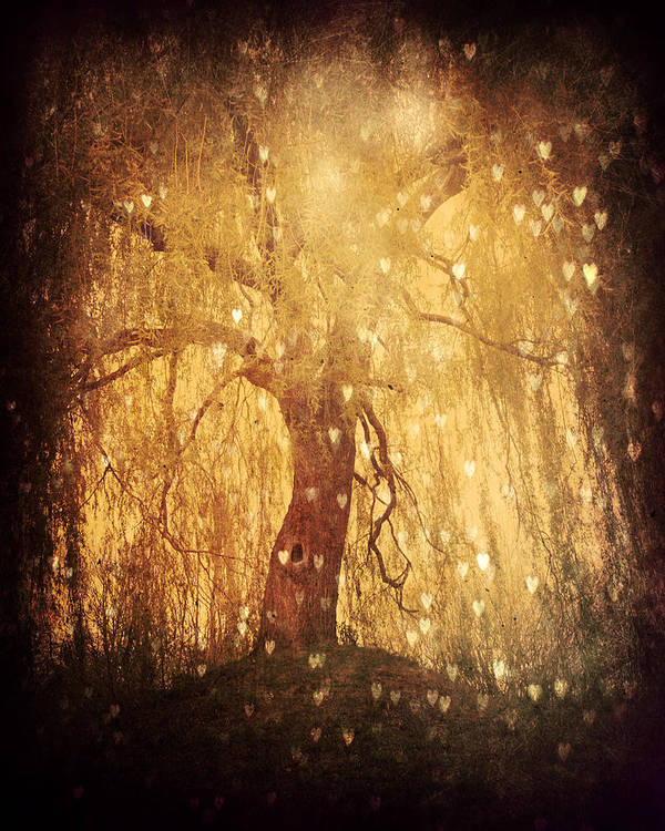 Tree Poster featuring the photograph Tonight Tonight by Danny Van den Groenendael