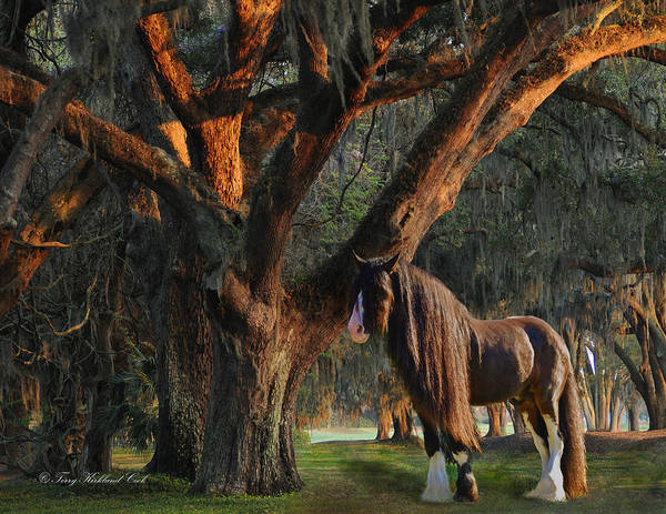 Equine Poster featuring the digital art Two Majestic Souls by Terry Kirkland Cook