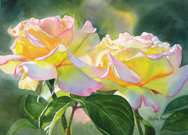 Peace Rose Art Poster featuring the painting Two Peace Rose Blossoms by Sharon Freeman
