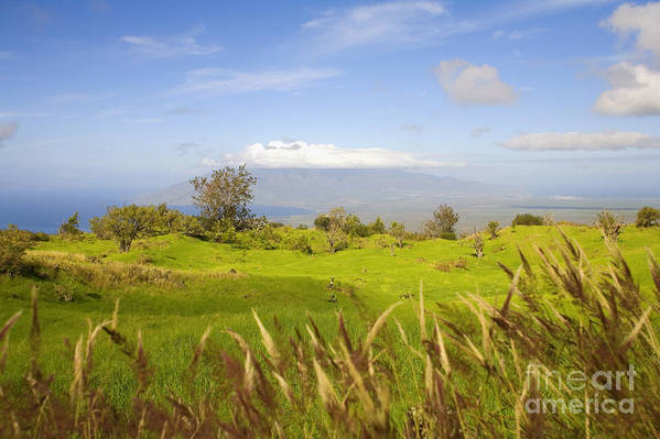 Afternoon Poster featuring the photograph Ulupalakua Landscape by Ron Dahlquist - Printscapes