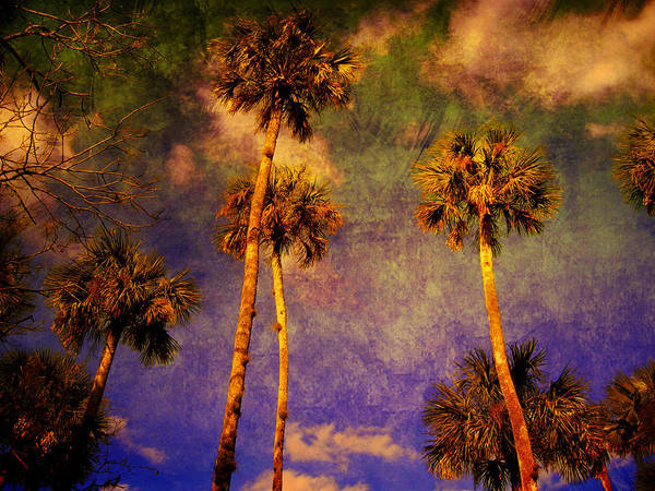 Palm Tree Poster featuring the photograph Up Up To The Sky by Susanne Van Hulst