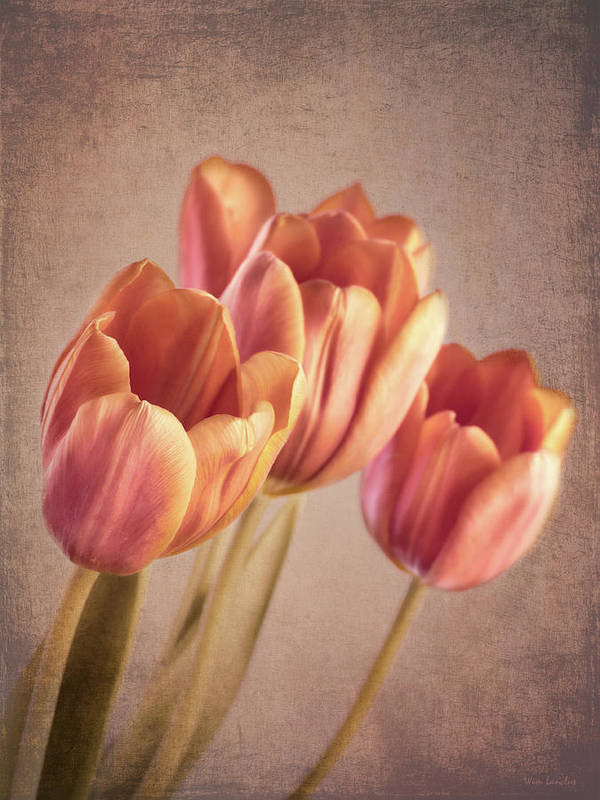 Tulips Poster featuring the photograph Vintage Tulips by Wim Lanclus