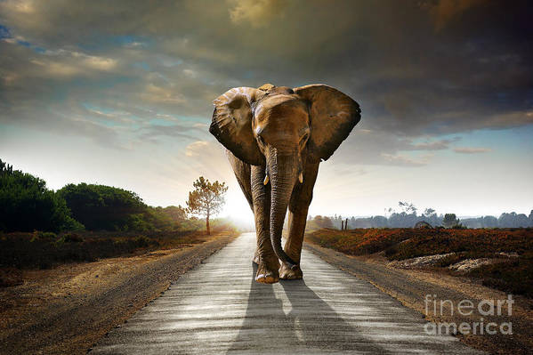 African Poster featuring the photograph Walking Elephant by Carlos Caetano